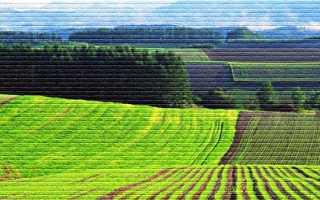 Как взять землю в аренду у государства для ведения бизнеса