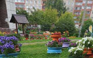 Правила и нормы содержания придомовой территории