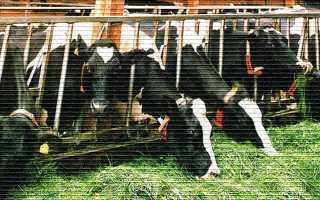 Что такое крестьянское фермерское хозяйство и как его зарегистрировать. Закон о КФХ