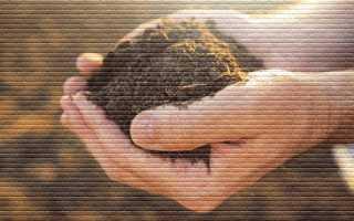 Что такое земельный пай и что с ним можно сделать