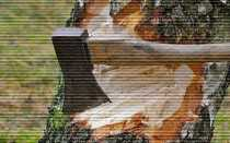 Можно ли вырубать деревья на своем собственном участке