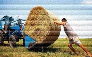 Как получить земельный участок под фермерское хозяйство