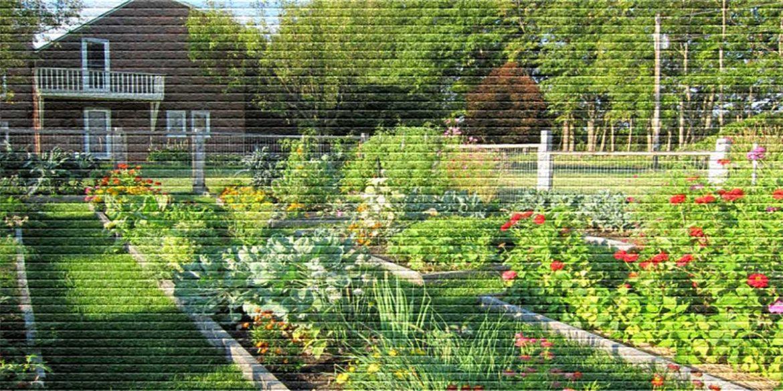 Участок с домом и огородом - картинка