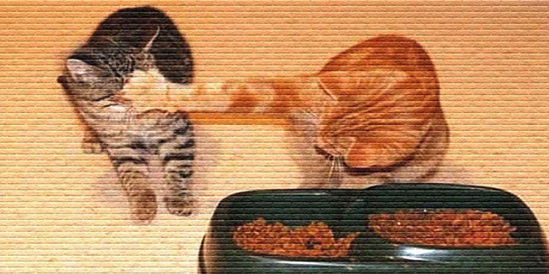 Кот отогнал другого - картинка