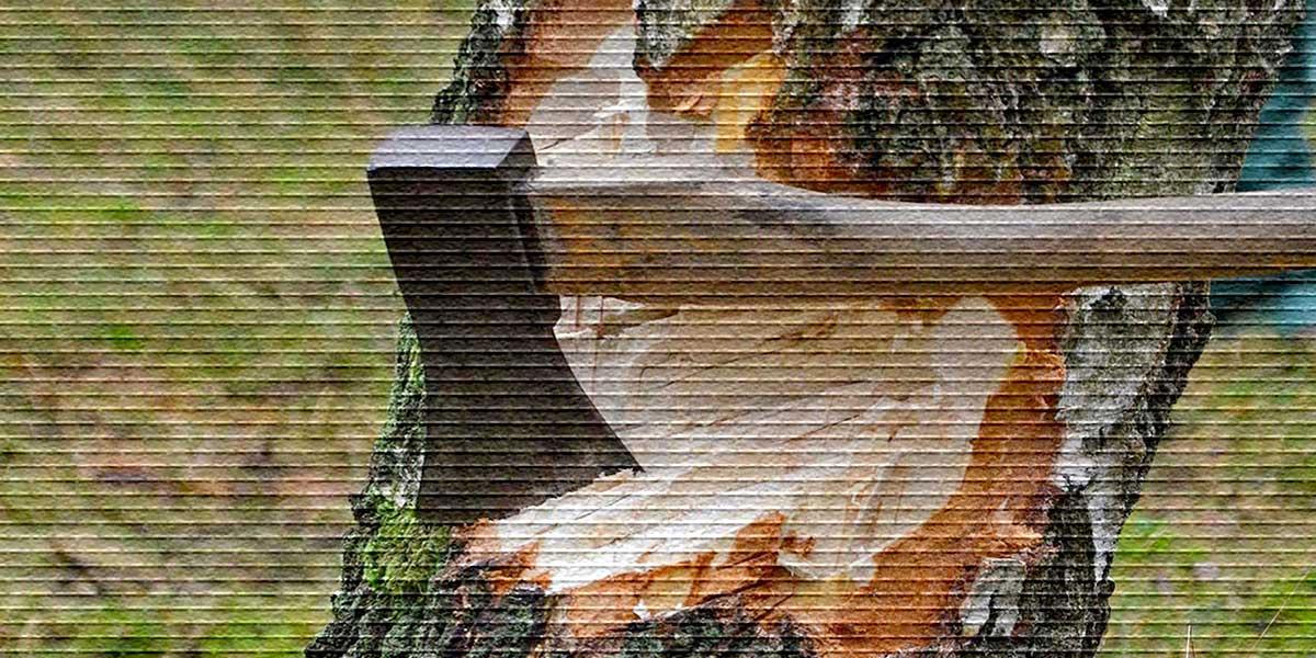 Топор в дереве