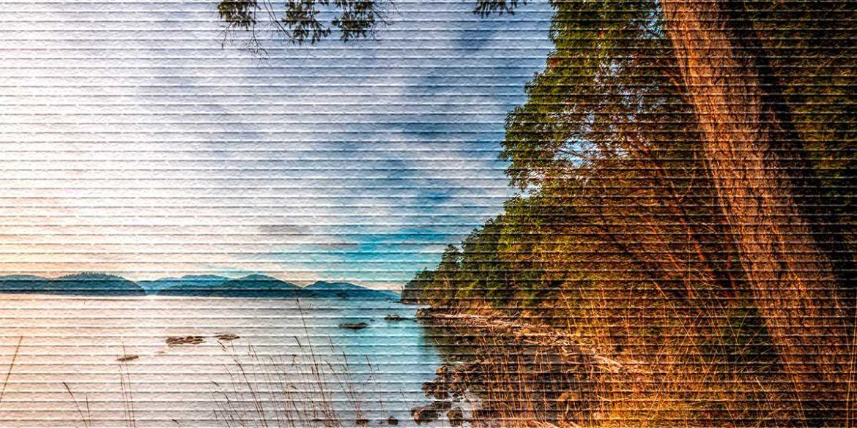 Берег озера - картинка